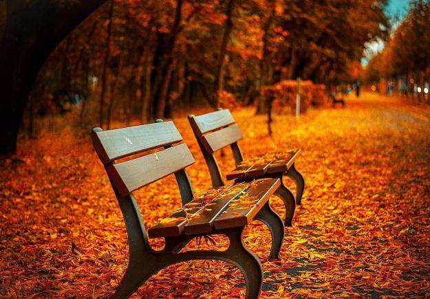 Alergias y asma en otoño